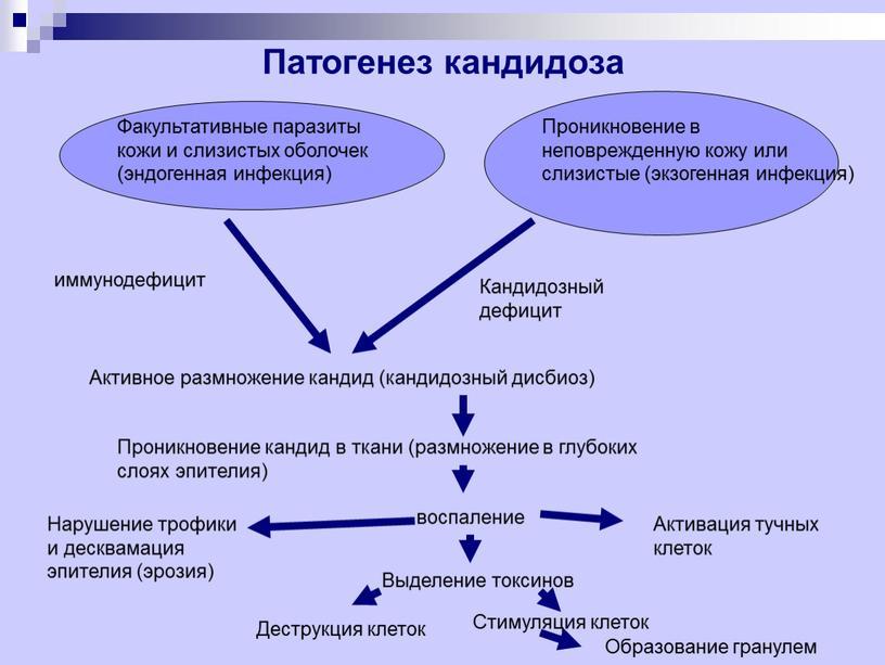Патогенез кандидоза Факультативные паразиты кожи и слизистых оболочек (эндогенная инфекция)