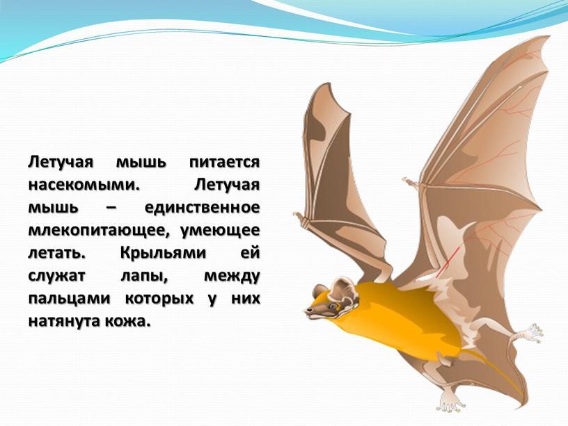 Летучая мышь питается насекомыми