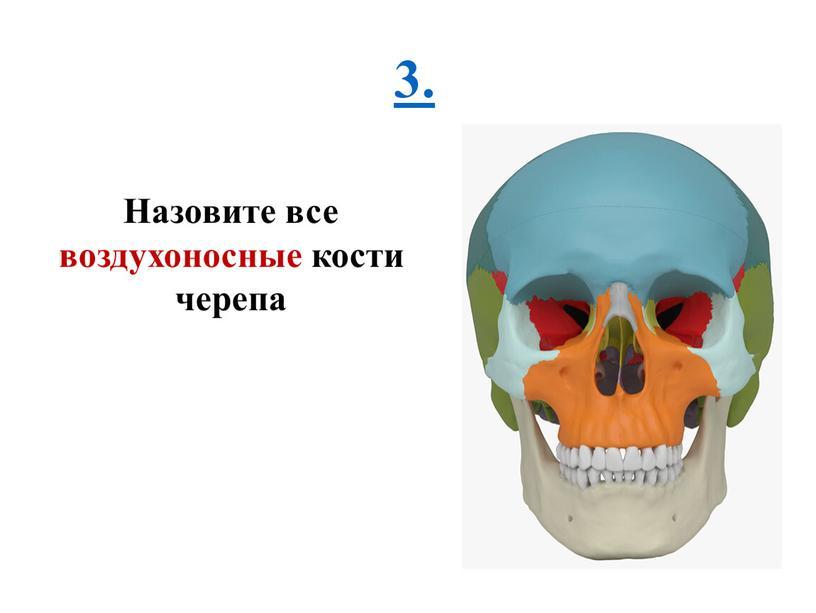 Назовите все воздухоносные кости черепа