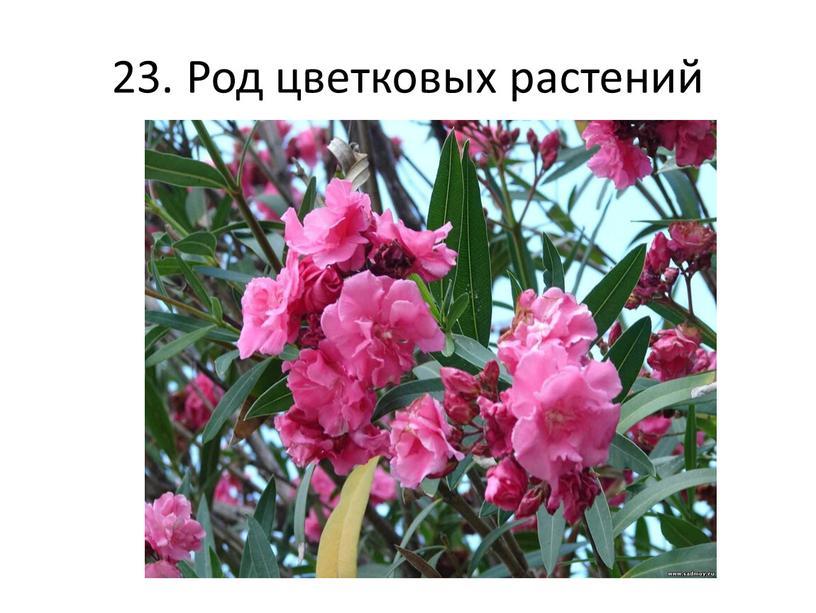 23. Род цветковых растений