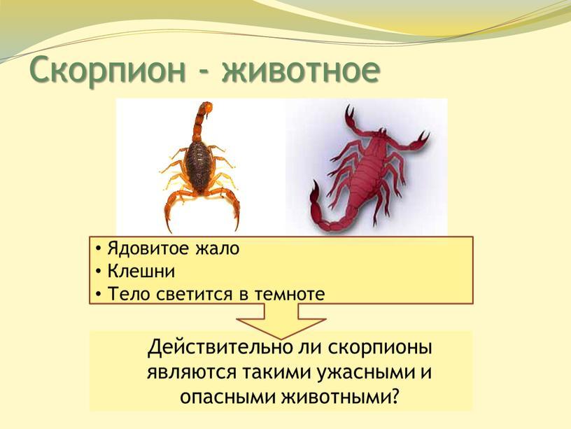 Скорпион - животное Действительно ли скорпионы являются такими ужасными и опасными животными?