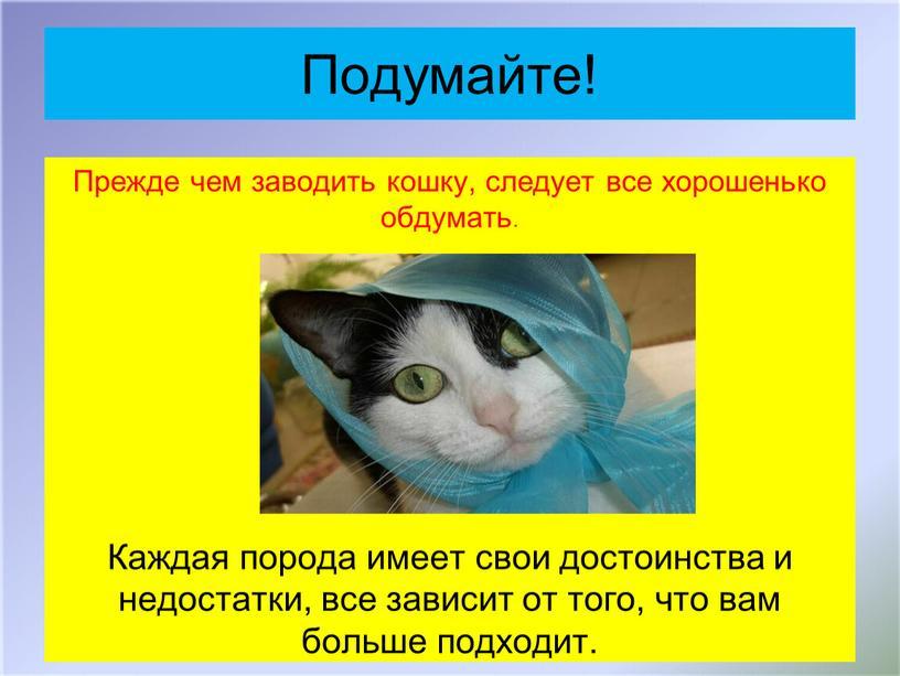 Подумайте! Прежде чем заводить кошку, следует все хорошенько обдумать
