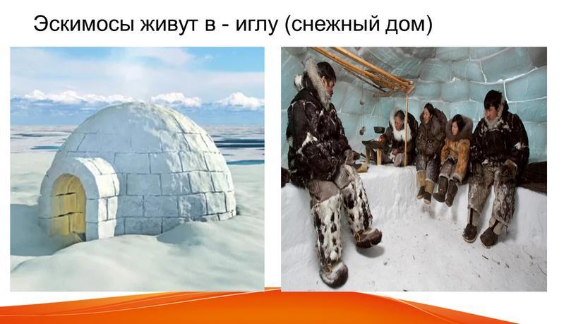 Эскимосы живут в - иглу (снежный дом)
