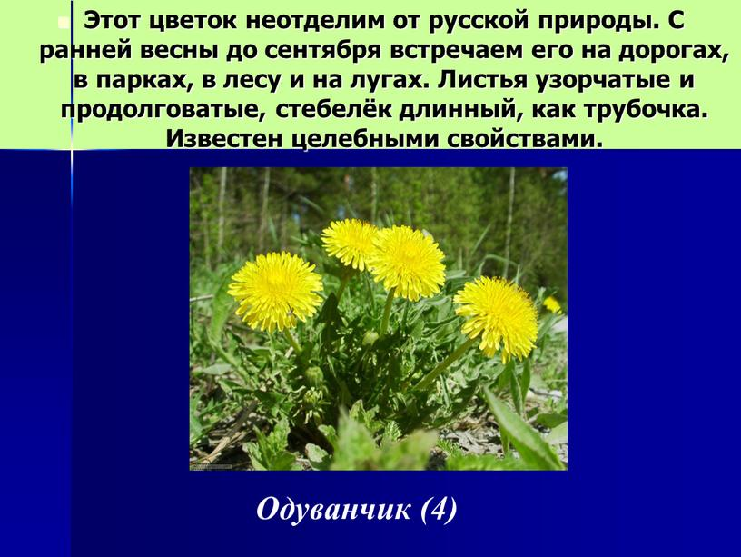 Этот цветок неотделим от русской природы