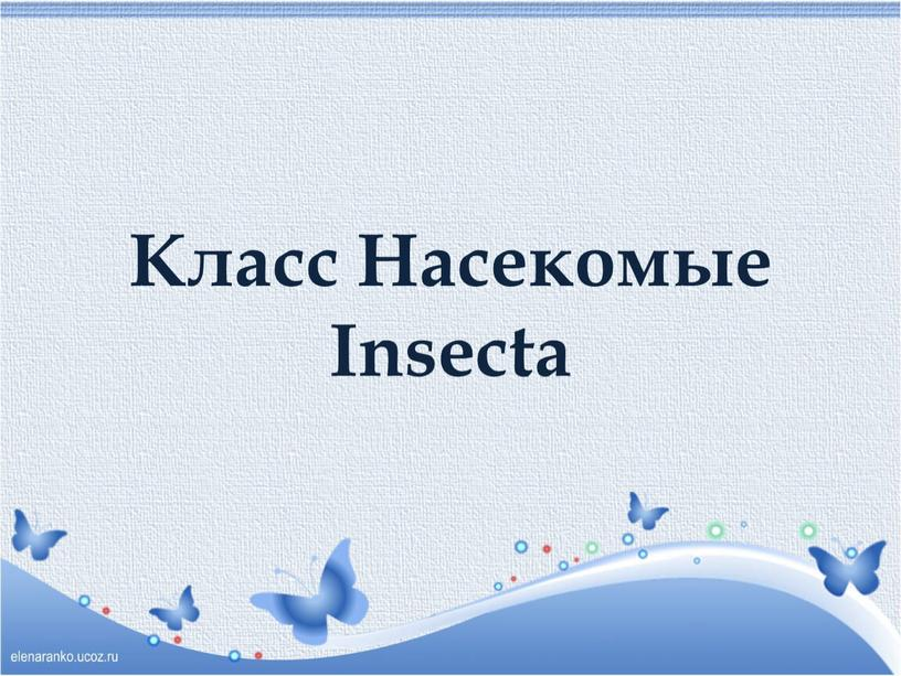 Класс Насекомые Insecta