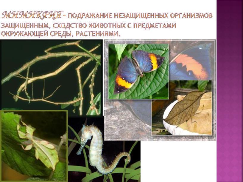 Мимикрия - подражание незащищенных организмов защищенным, сходство животных с предметами окружающей среды, растениями