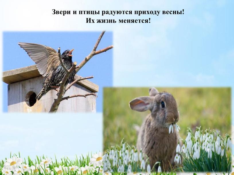 Звери и птицы радуются приходу весны!