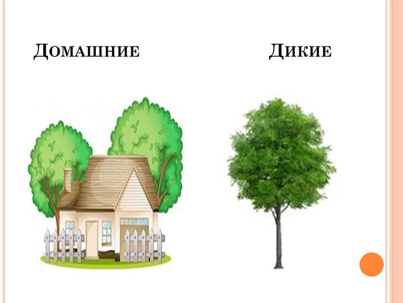 Домашние