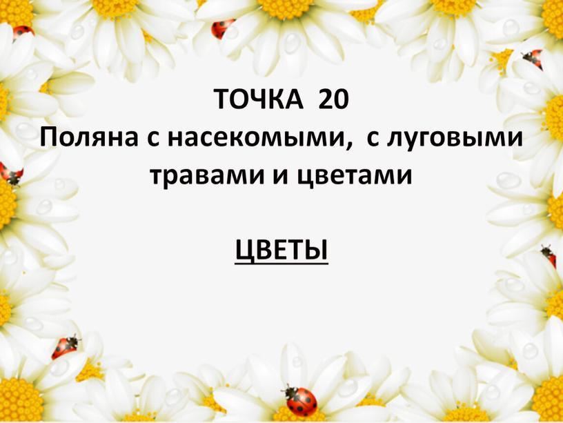 ТОЧКА 20 Поляна с насекомыми, с луговыми травами и цветами