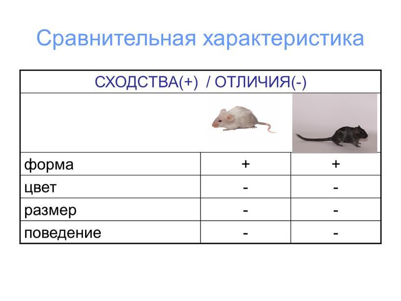 Сравнительная характеристика СХОДСТВА(+) /