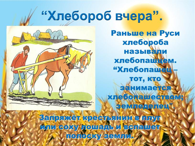 Раньше на Руси хлебороба называли хлебопашцем