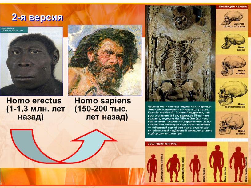 Homo erectus (1-1,3 млн. лет назад) 2-я версия