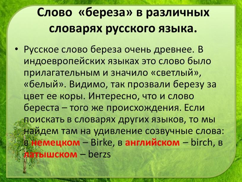 Русское слово береза очень древнее