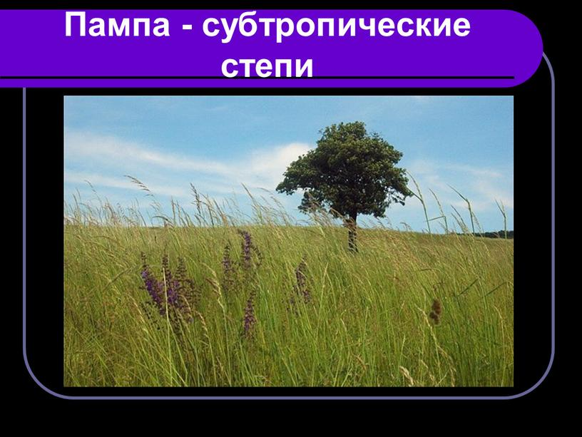 Пампа - субтропические степи