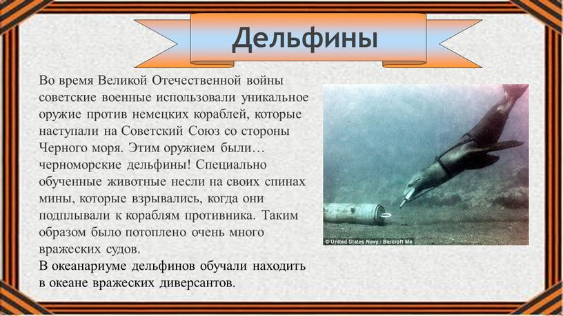 Дельфины Во время Великой Отечественной войны советские военные использовали уникальное оружие против немецких кораблей, которые наступали на