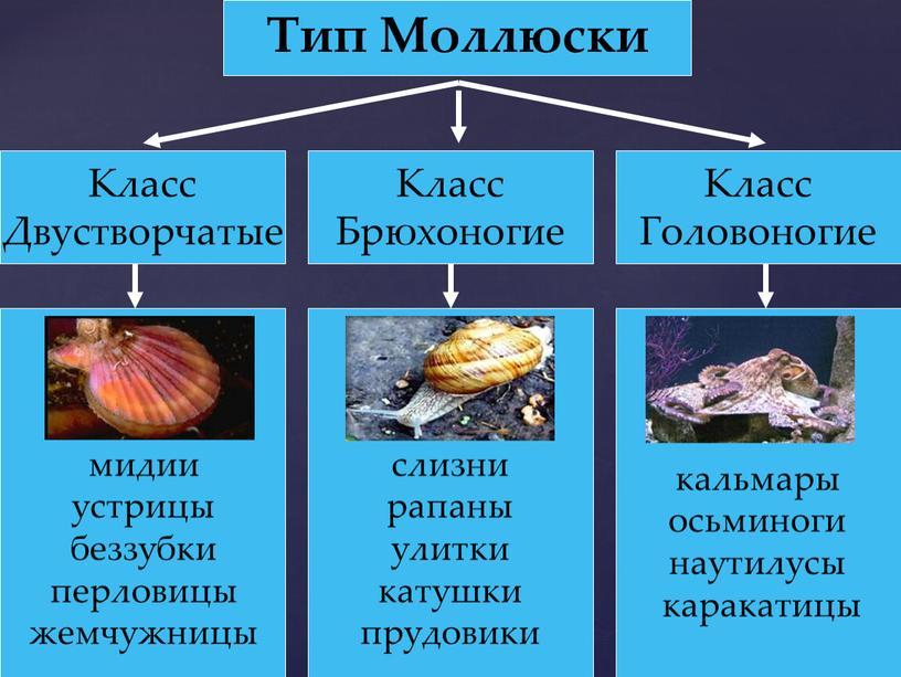 Тип Моллюски Класс Двустворчатые