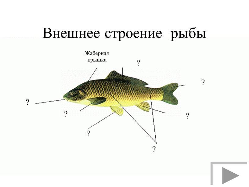 Внешнее строение рыбы ? ? ? ? ? ? ?