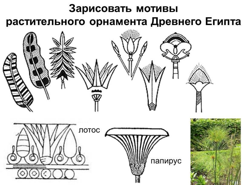 Зарисовать мотивы растительного орнамента