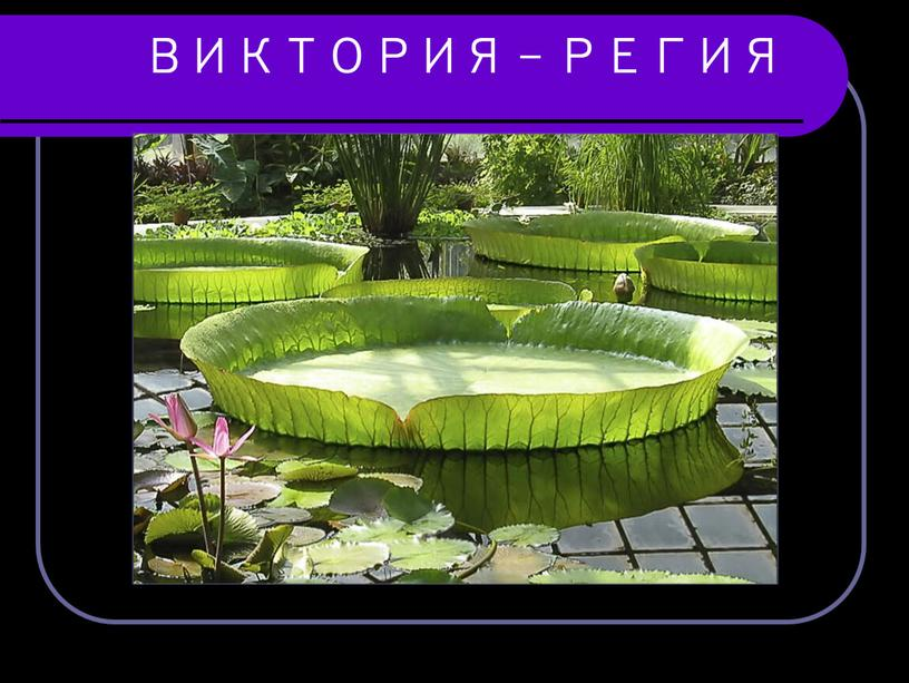 ВИКТОРИЯ - РЕГИЯ