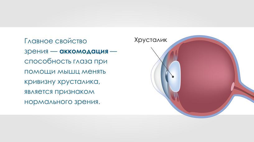 Главное свойство зрения — аккомодация — способность глаза при помощи мышц менять кривизну хрусталика, является признаком нормального зрения