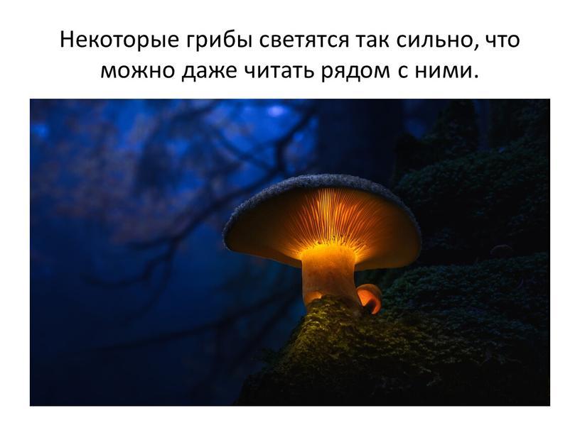 Некоторые грибы светятся так сильно, что можно даже читать рядом с ними