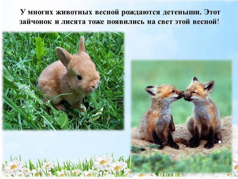 У многих животных весной рождаются детеныши