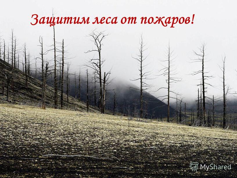Защитим леса от пожаров!