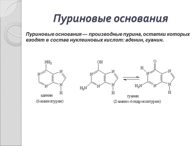 Пуриновые основания Пуриновые основания — производные пурина, остатки которых входят в состав нуклеиновых кислот: аденин, гуанин