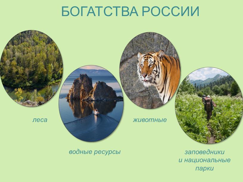 БОГАТСТВА РОССИИ животные водные ресурсы леса заповедники и национальные парки