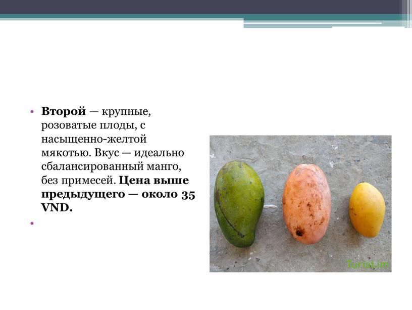 Второй — крупные, розоватые плоды, с насыщенно-желтой мякотью