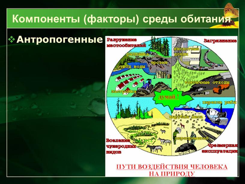 Антропогенные Компоненты (факторы) среды обитания
