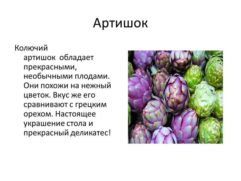 Артишок Колючий артишок обладает прекрасными, необычными плодами