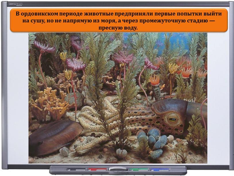 В ордовикском периоде животные предприняли первые попытки выйти на сушу, но не напрямую из моря, а через промежуточную стадию — пресную воду