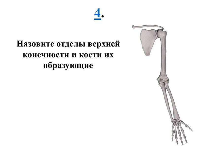 Назовите отделы верхней конечности и кости их образующие