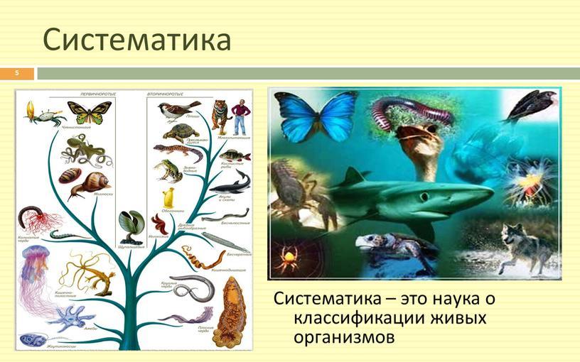 Систематика Систематика – это наука о классификации живых организмов 5