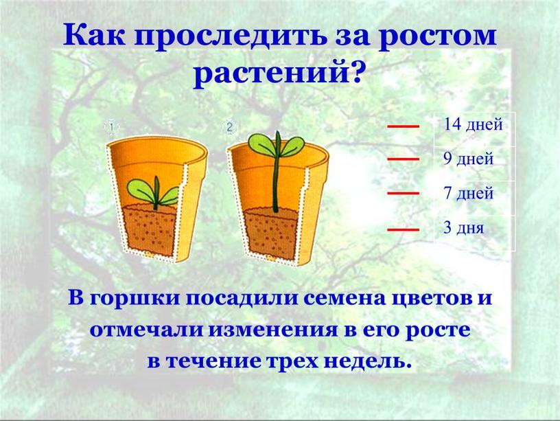 Как проследить за ростом растений?