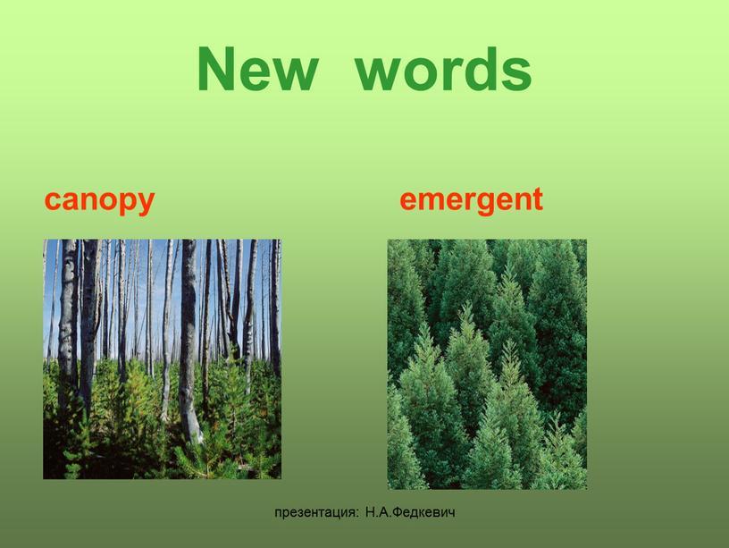 Н.А.Федкевич New words canopy emergent