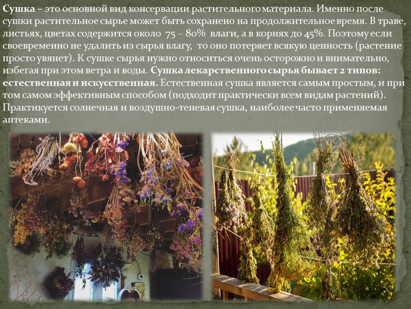 Сушка – это основной вид консервации растительного материала