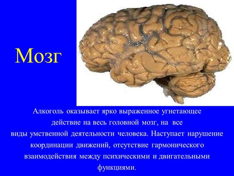 Мозг Алкоголь оказывает ярко выраженное угнетающее действие на весь головной мозг, на все виды умственной деятельности человека