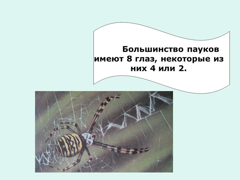 Большинство пауков имеют 8 глаз, некоторые из них 4 или 2