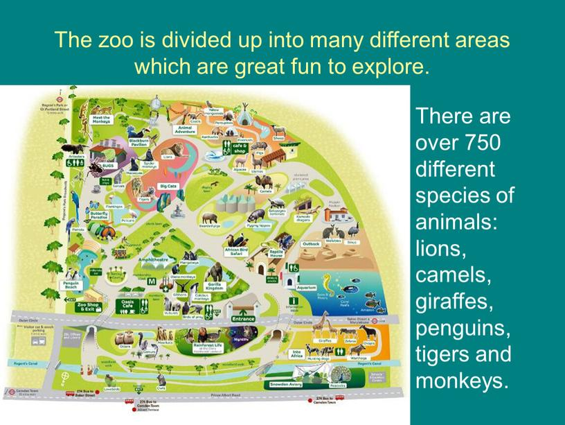 The zoo is divided up into many different areas which are great fun to explore