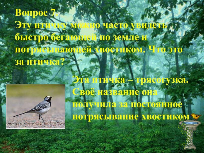 Вопрос 7. Эту птичку можно часто увидеть быстро бегающей по земле и потрясывающей хвостиком