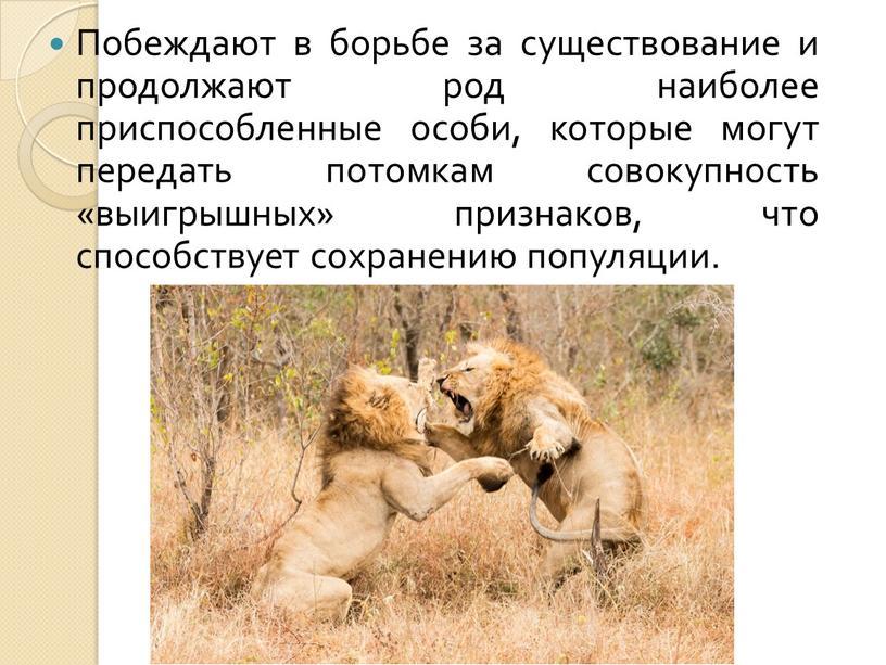 Побеждают в борьбе за существование и продолжают род наиболее приспособленные особи, которые могут передать потомкам совокупность «выигрышных» признаков, что способствует сохранению популяции