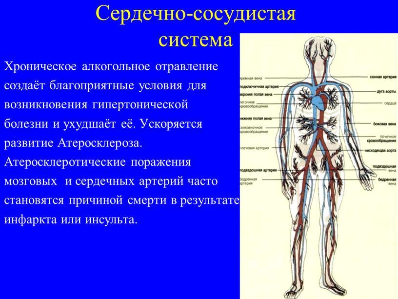 Сердечно-сосудистая система Хроническое алкогольное отравление создаёт благоприятные условия для возникновения гипертонической болезни и ухудшаёт её