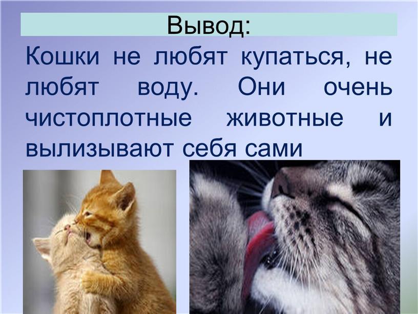 Вывод: Кошки не любят купаться, не любят воду