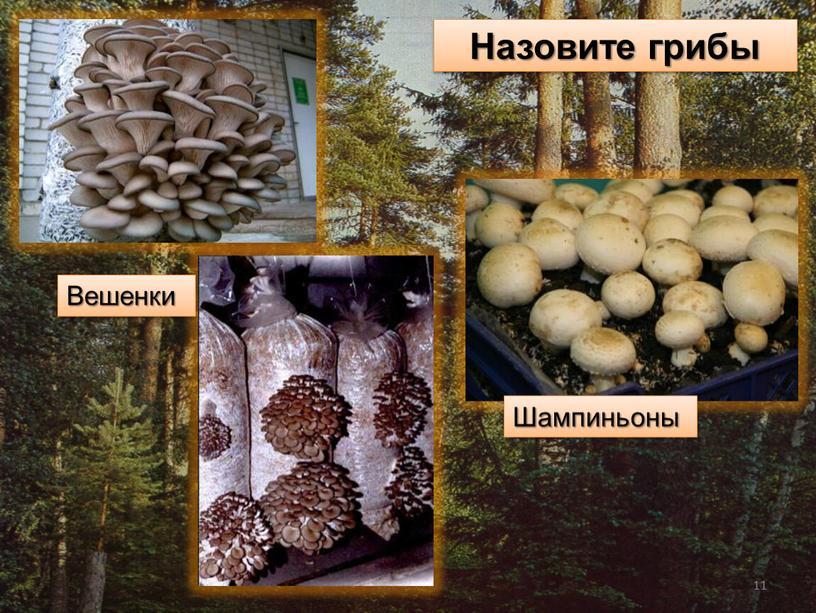 Назовите грибы Вешенки Шампиньоны 11
