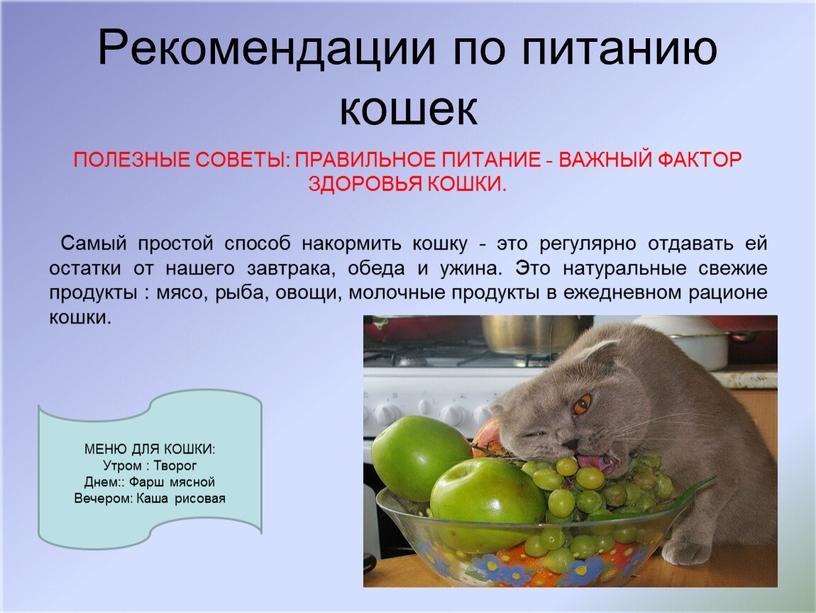Рекомендации по питанию кошек ПОЛЕЗНЫЕ