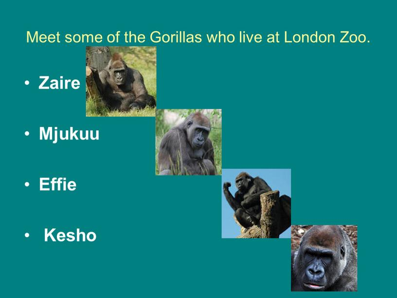 Meet some of the Gorillas who live at