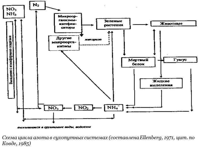 Схема цикла азота в сухопутных системах (составлена