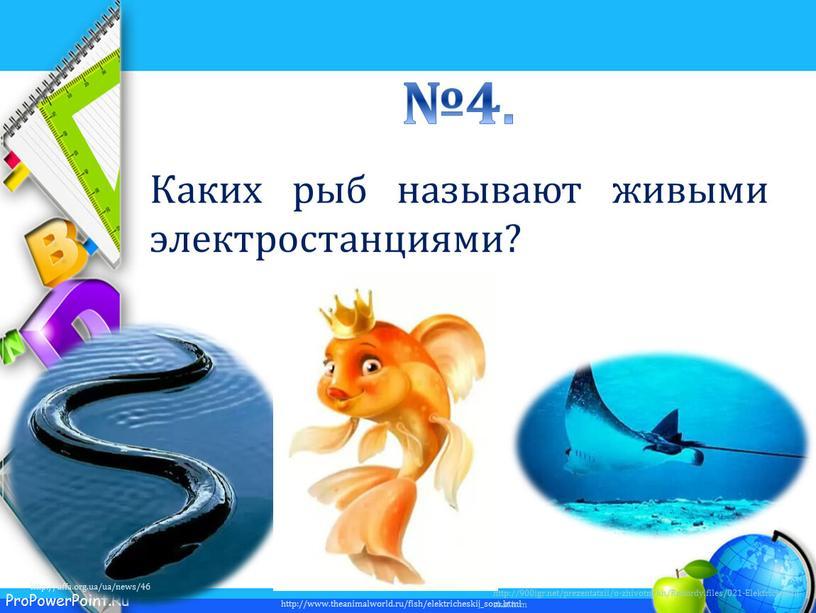 Rekordy.files/021-Elektricheskij-skat